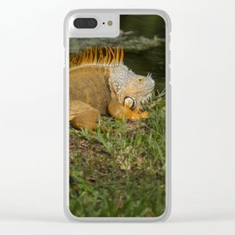 Iguana in the Sun Clear iPhone Case