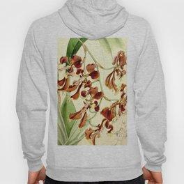 Cyrtochilum serratum Hoody