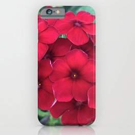 Red Summer Phlox iPhone Case