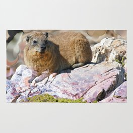 African Rock Hyrax Rug