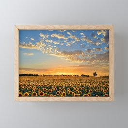 Sunflowers and Sunflower Fields at Sunset - Jeanpaul Ferro Framed Mini Art Print