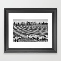 Sheeep Framed Art Print