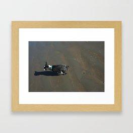 Banyan - Boston Terrier Framed Art Print