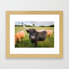 Highland Cow - Head Tilt Framed Art Print