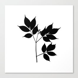 Black leaves on white Canvas Print