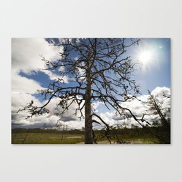 Withered Tree Canvas Print