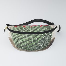 Pincushion Cactus (Mammillaria Dolichocentra) from Iconographie descriptive des cactees by Charles A Fanny Pack