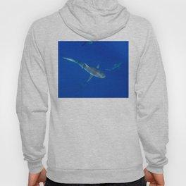 Hawaiian Shark VI Hoody
