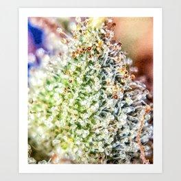 Top Shelf Bud Diamond OG Strain Trichomes Close Up View Art Print