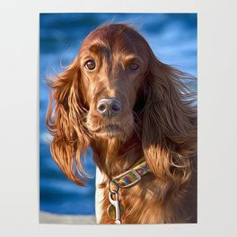 Setter dog on the pier Poster