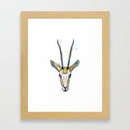 The Antelope Framed Art Print