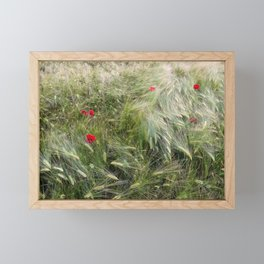 Red poppies in a wheat field. Framed Mini Art Print