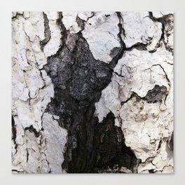 bark abstact no1 Canvas Print