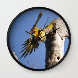 Birds from Pantanal Arara Canindé Wall Clock