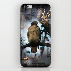 A Hawks Dream iPhone & iPod Skin