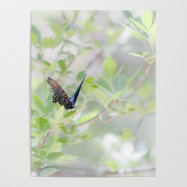 """Swallowtail Splendor"" Butterfly Art by Murray Bolesta Poster"