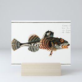 Father Lascher (Cottus Scorpius) from Ichtylogie, or Natural History  General and Particular of Fish Mini Art Print