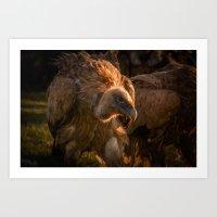Vulture #1 Art Print