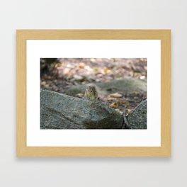 Chipmunk Eatin' Grape Framed Art Print