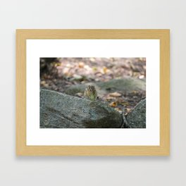 Chipmunk Eatin' Grape Framed Art Print