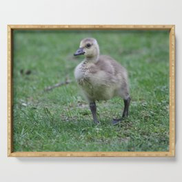 baby gosling (canada goose) Serving Tray