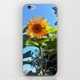 Southern Maine Sunflower iPhone Skin