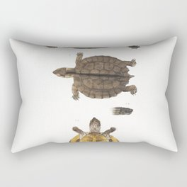 1 Lined backed Elaps (Elaps dorsalis) 2 Chain Spotted Lycodon (Lycodon catenatus) from Illustrations Rectangular Pillow