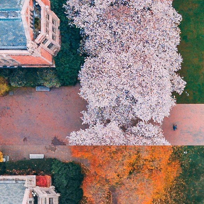 UW Cherry Blossoms: 4 Seasons Leggings