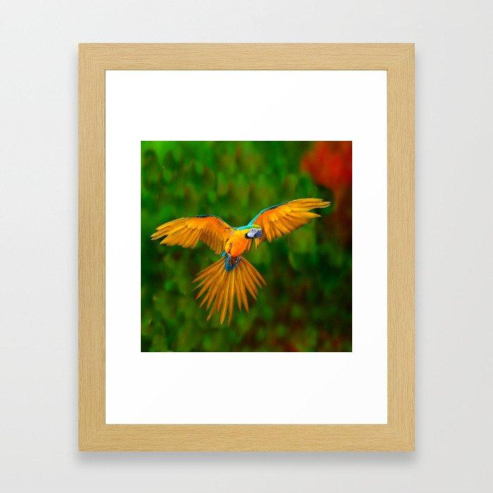 Flying Golden Blue Macaw Parrot Green  Art Framed Art Print