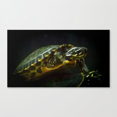 Hey there turtle, whatcha up to? Canvas Print