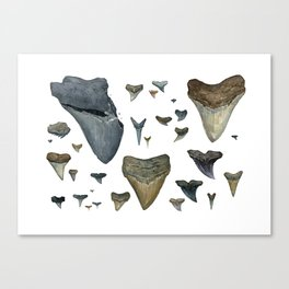 Fossil shark teeth watercolor Canvas Print