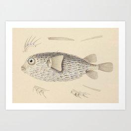 Naturalist Pufferfish Art Print