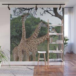 3 giraffes Wall Mural