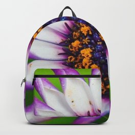 OSTEOSPERMUM 'Margarita White Spoon' Backpack