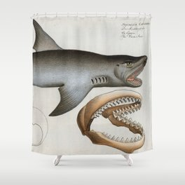 Vintage Illustration of a Great White Shark (1785) Shower Curtain