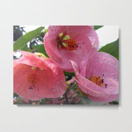Flowering Maple Metal Print