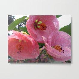 Flowering Maple Metal Print