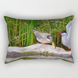 Baby Arctic Tern Feeding - Alaska Rectangular Pillow