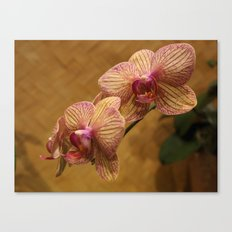 Orchids I Canvas Print