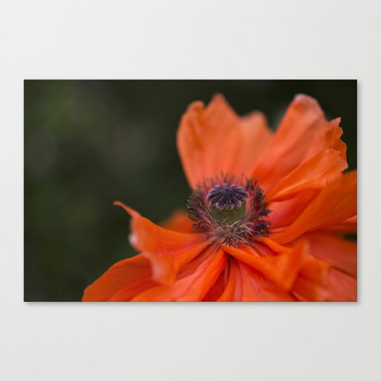 Poppyqueen Poppy Flower Flowers Poppies Canvas Print