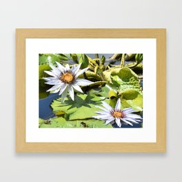 Flowers in the Lily Pond Framed Art Print