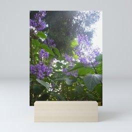 Salvia 'Amistad' (Friendship Sage) Mini Art Print