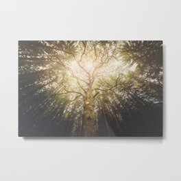 I found a tree in the forest Metal Print