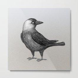 Western jackdaw pencildrawing Metal Print