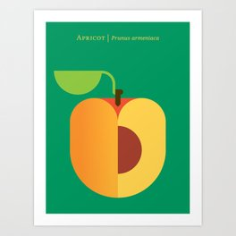 Fruit: Apricot Art Print
