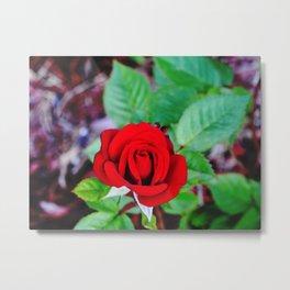 The Vibrant Rose Metal Print