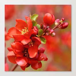Red 95 Canvas Print