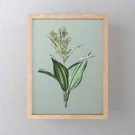 Vintage False Helleborine Botanical Illustration on Mint Green Framed Mini Art Print