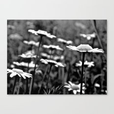 She's a Daisy Canvas Print