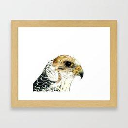 Gyrfalcon glo-thru Framed Art Print